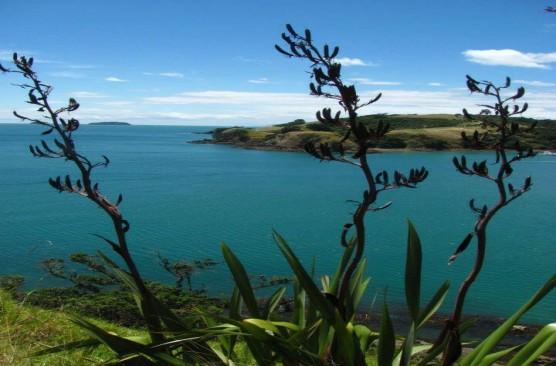 Waiheke Ferry - Auckland to Waiheke Open Return