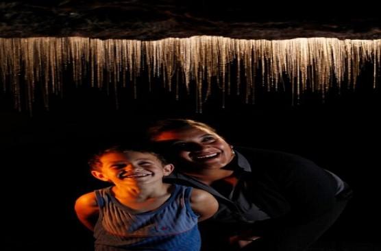 Waitomo Glowworm Caves Day Trip (Auckland to Auckland)