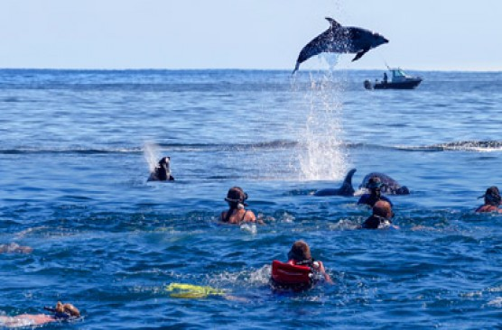 Bay of Islands Day Tour + Swim with Dolphins Cruise